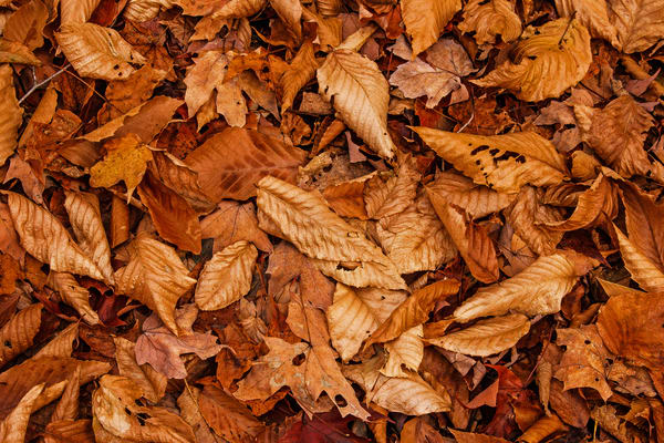 Leaves Of Brown Photography Art   Nelson Rudiak Photography