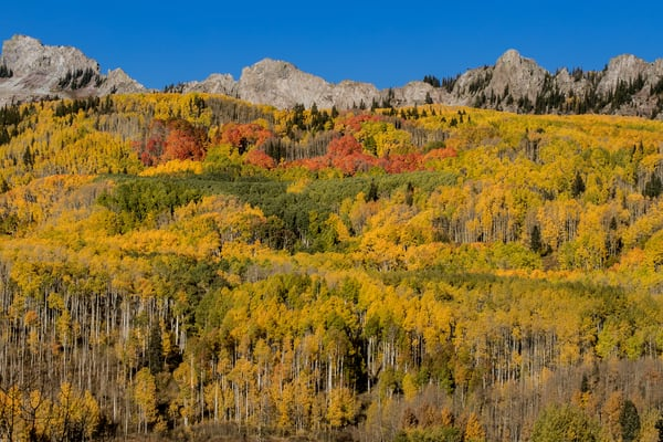 Autumn Color At Kebler Pass Colorado Art | Kirk Fry Photography, LLC