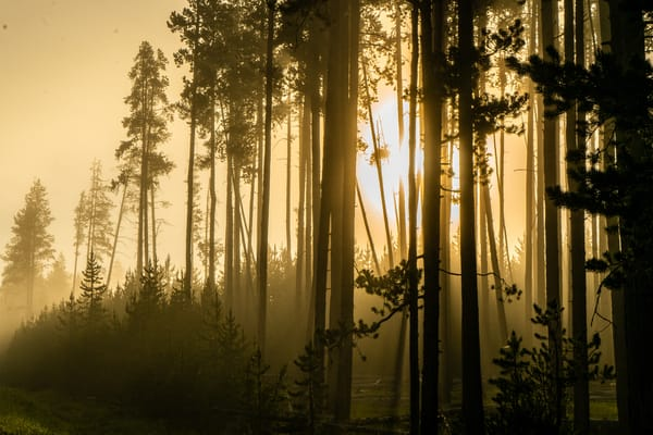 Morning Sun Glows Through The Trees Photography Art | Christopher Scott Photography