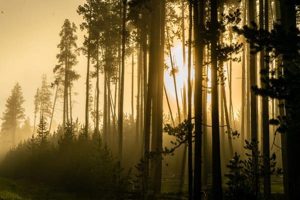 Morning Sun Glows Through The Trees Photography Art | Christopher Scott Photography