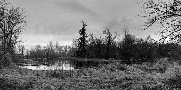 Dark Winter Skies, Nisqually National Wildlife Refuge, Washington, 2016