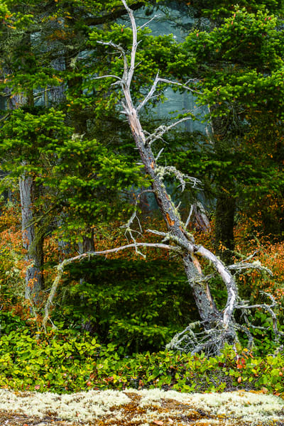 Edge of the Forest, Deception Pass State Park, Washington, 2016