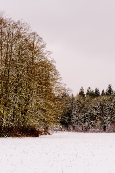 Late Autumn Snowfall No. 7, Rasar State Park, Washington, 2016