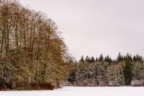 Late Autumn Snowfall No. 8, Rasar State Park, Washington, 2016