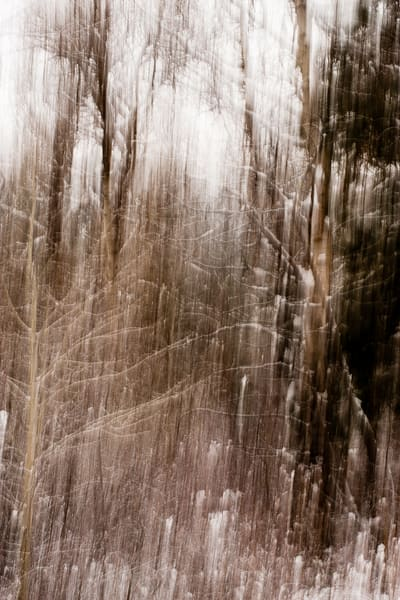 Late Fall Snowy Forest Abstract, Kittitas County, Washington, 2012