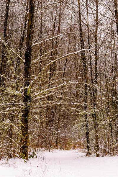 Late Autumn Snowfall No. 6, Rasar State Park, Washington, 2016