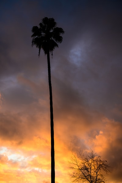 Los Angeles Sunset, California, 2019