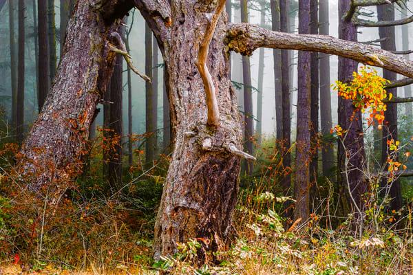Misty Summer Forest, Deception Pass State Park, Washington, 2016