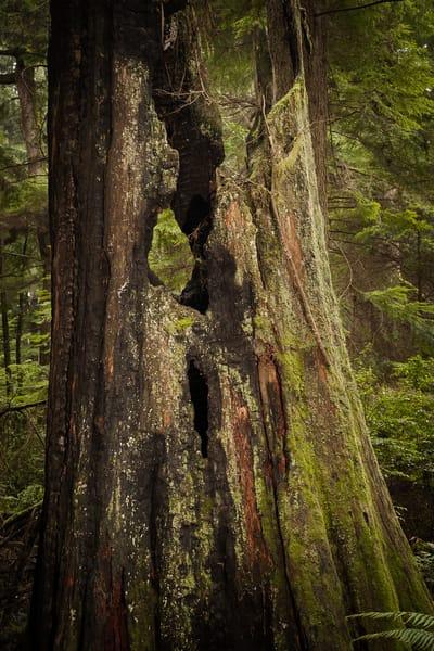 Old Stump, Tacoma, Washington, 2015