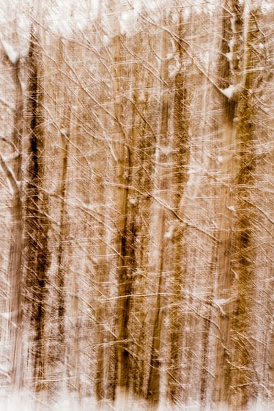 Snowy Forest Abstract, 2012