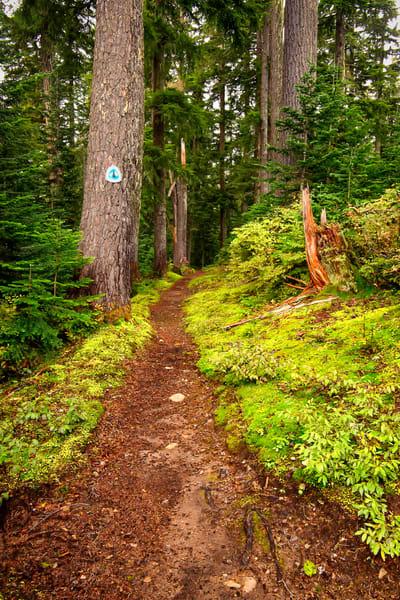 Pacific Crest Trail, Meadow Pass, Washington, 2013