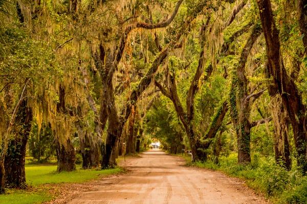 Avenue Of Oaks Photography Art | Willard R Smith Photography
