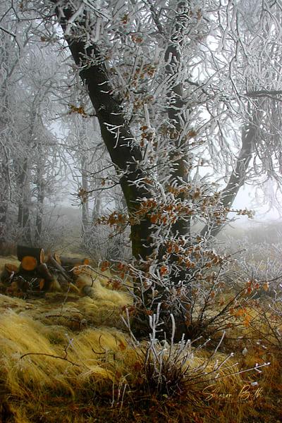 Autumn Frost Art | Sharon Beth
