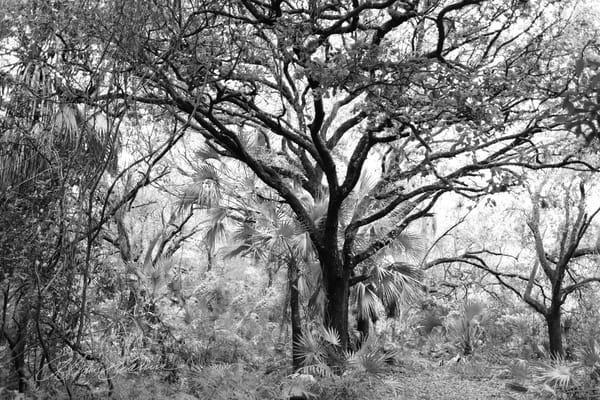 Tangled Splender Photography Art | cosimo scianna