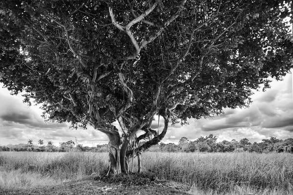Curvaceous Limb Photography Art | cosimo scianna
