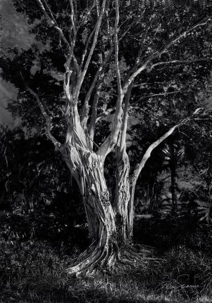 Dancing In The Dark Photography Art | cosimo scianna