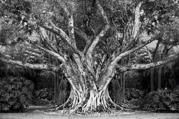 Double Time Photography Art | cosimo scianna