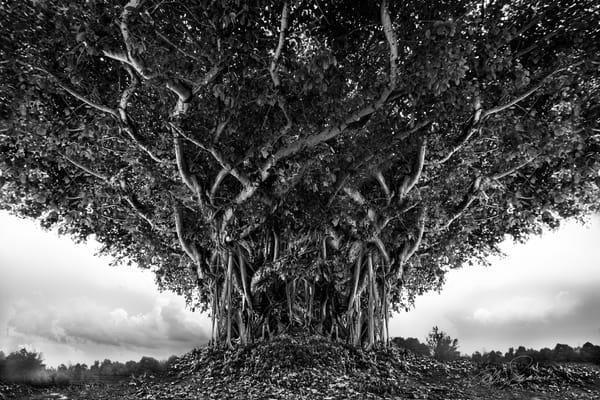 Defiant Presence Photography Art | cosimo scianna