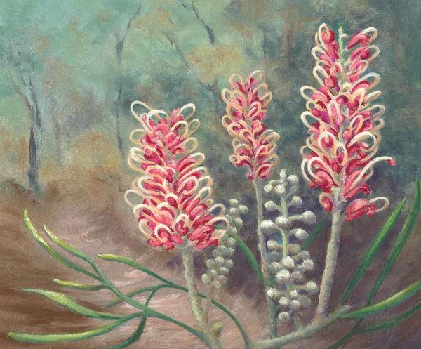 Grevillea Blossom