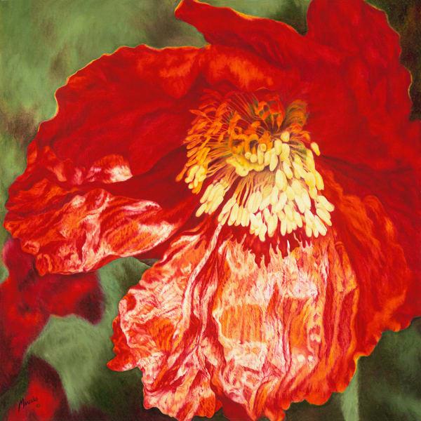 Poppy   Limited Edition Print Art | Mercedes Fine Art