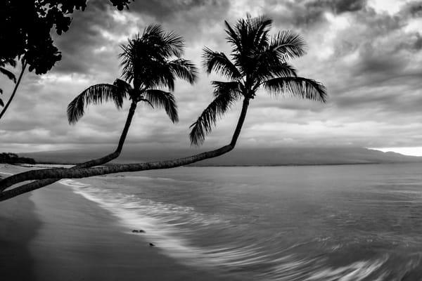 Palms of Maalaea
