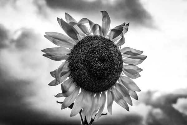 Sun FLower Smile