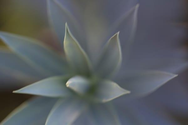 Agave Heart Photography Art | Carol's Little World