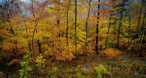 Autumn Gold Photography Art   Nelson Rudiak Photography