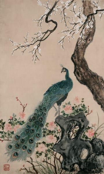 Peacock And Rock  Art | donnadacuti