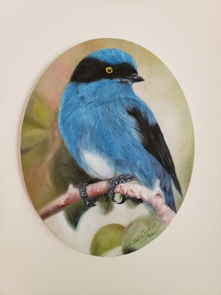 Black Faced Dacnis  Art | artalacarte