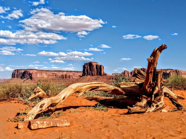 Fallen Tree In Monument Valley Photography Art | Christopher Scott Photography