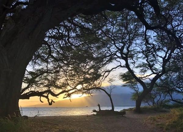 Sunset Through The Trees Art | GGRGA INNOVATIVE SOLUTIONS LLC