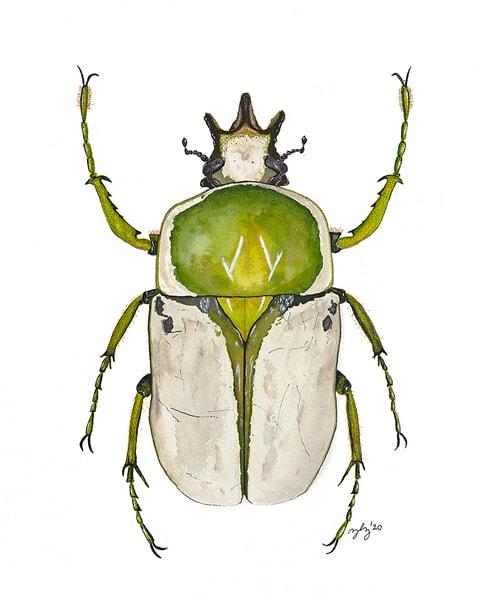 Beetle 1 Art | Cincy Artwork
