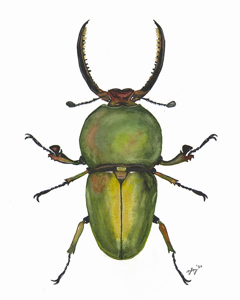 Beetle 2 Art | Cincy Artwork