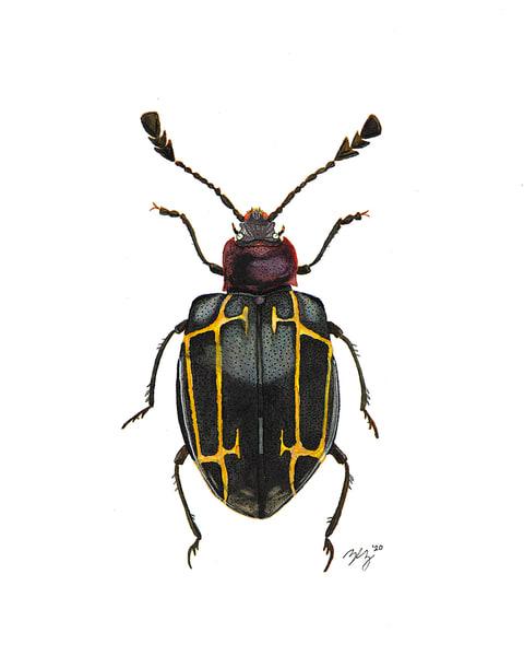 Beetle 4 Art | Cincy Artwork