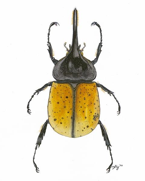 Beetle 3 Art | Cincy Artwork
