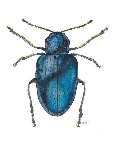 Beetle 5 Art | Cincy Artwork