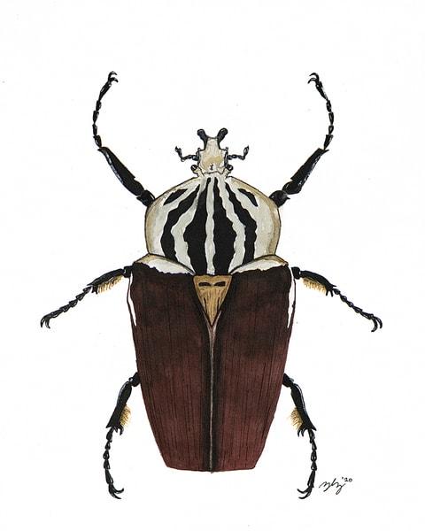 Beetle 6 Art | Cincy Artwork