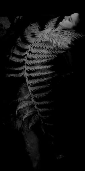 Fern Photography Art | Sudha Photography
