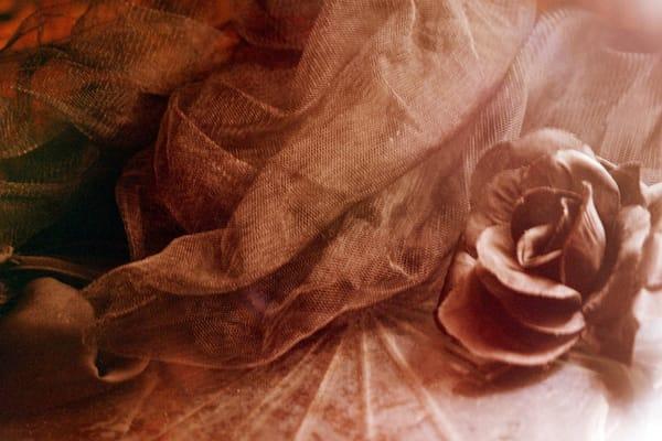 Ashley Caldwell - photography - Pink 35mm film - vintage - flower - Vintage Rose