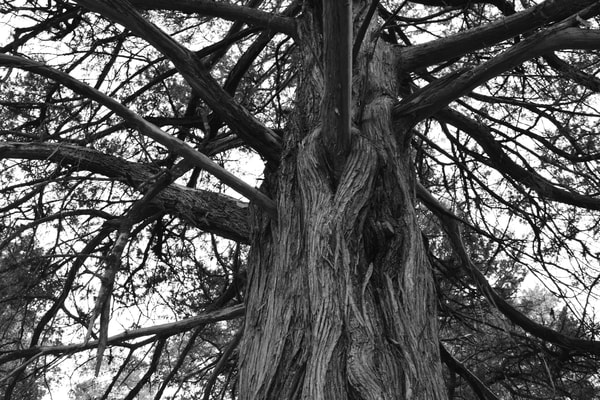 Ashley Caldwell - photography - nature - trees - Branches