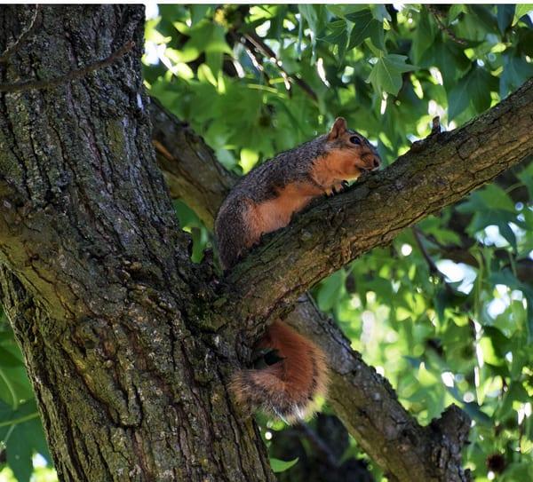 Baby Squirrel In Tree Art | DocSaundersPhotography