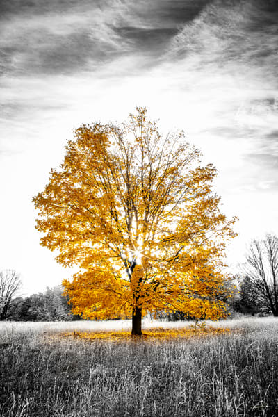 Last Call For Fall Photography Art   Drew Smith Photography, LLC