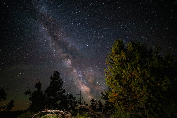 Milky Way Over Trees In Craters Of Moon National Monument Photography Art | Christopher Scott Photography