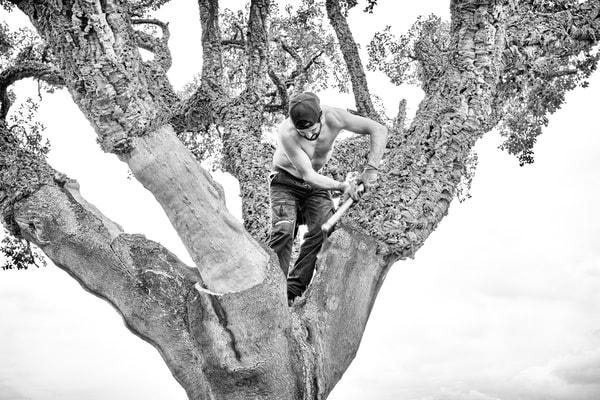 Cork Harvesting #1 Photography Art   Roberto Vámos Photography