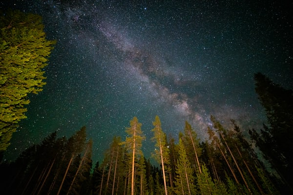 Milk Way Galaxy Over Trees In Yellowstone National Park Photography Art | Christopher Scott Photography