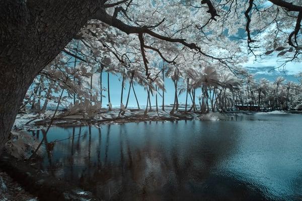 Blue Hawaii Photography Art | Sudha Photography
