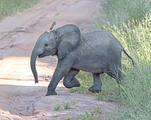 Happy Ele-elephant-janetogren.com