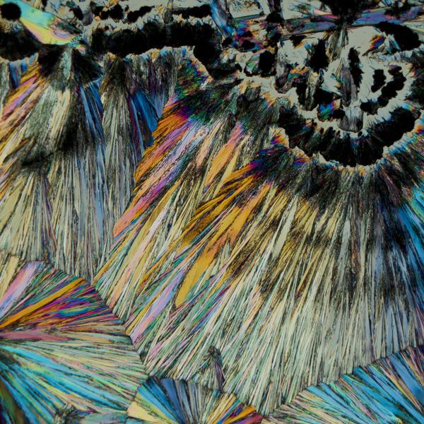 Noble Veil Art | Carol Roullard Art