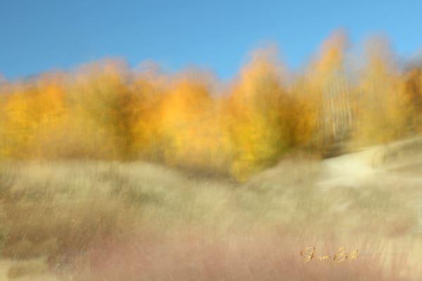 Impressionist Aspen Grove Art | Sharon Beth